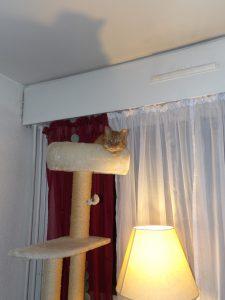 Souan on his high perch