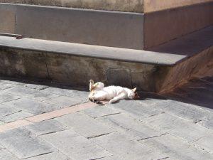 I'm 97% sure this cat was alive...
