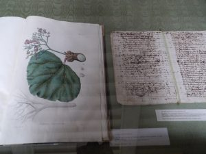 drawings and writing from the Cartusian monks, who contributed a lot to medicinal knowledge during their time